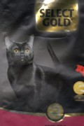 cat black selct gold